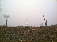 erdőkiirtás